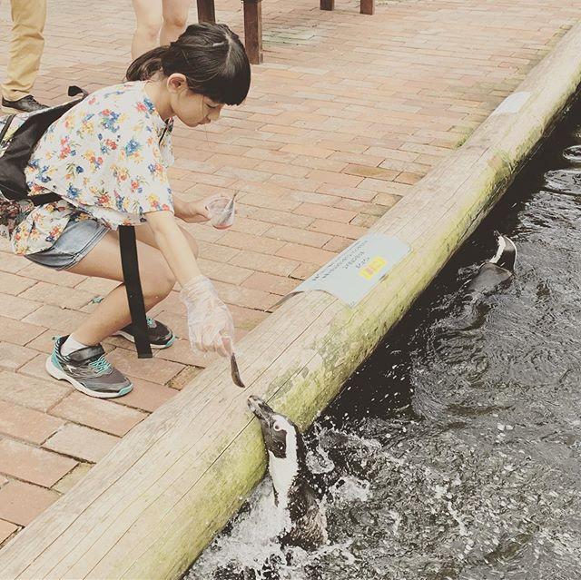 夏休み2019②ペンギンにエサフラミンゴにエサエミューにもエサやりたい放題。#富士花鳥園#かなりつぼった