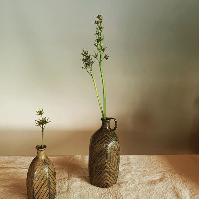 これは何?植物に詳しくなりたい。次の展示会5/29〜6/15Rohan(浜松)にて展示会の開催方法はこちらで@rohan_hamamatsu ご確認ください。よろしくお願いいたします。@jojosusumu