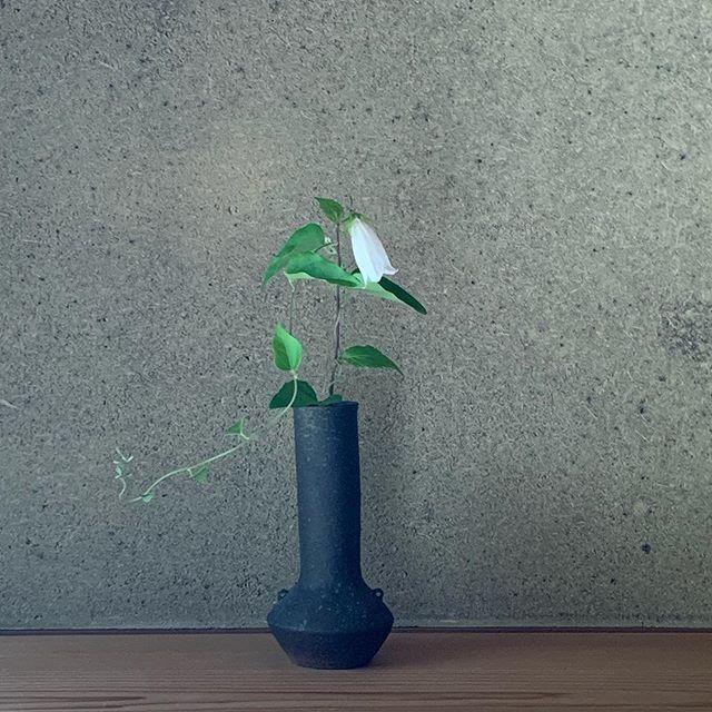 梅雨ですね。次の展示会は城 進 陶磁器展6/26(金)ー7/15(水)京都やまほん在廊日 6/26休廊日 木曜日@kyoto_yamahon @jojosusumu